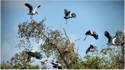 Chiêm bao thấy chim trời điềm báo gì đánh số gì chắc trúng